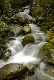 Поток в тропическом лесе Стоковое Изображение RF