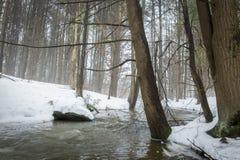 Поток в туманном лесе Стоковые Изображения