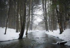 Поток в туманном лесе Стоковая Фотография RF