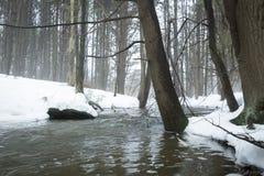 Поток в туманном лесе Стоковые Изображения RF