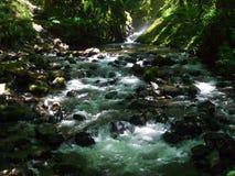 Поток в ущелье, Орегоне Стоковая Фотография RF