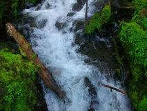 Поток в ущелье, Орегоне Стоковые Изображения RF