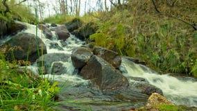 Поток горы в лесе сток-видео