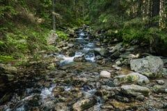 Поток горы в лесе стоковые фотографии rf