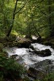 Поток горы в лесе Стоковое Изображение