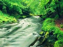 Поток горы в овраге песчаника и под зелеными ветвями акаций, буков и дубов Уровень воды делает зеленые отражения _ стоковая фотография