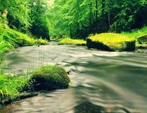 Поток горы в овраге песчаника и под зелеными ветвями акаций, буков и дубов Уровень воды делает зеленые отражения _ стоковая фотография rf