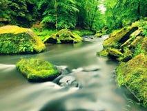 Поток горы в овраге песчаника и под зелеными ветвями акаций, буков и дубов Уровень воды делает зеленые отражения _ стоковые фотографии rf