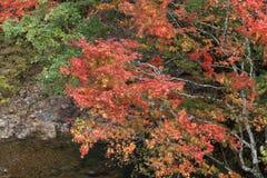 Поток горы в осени Стоковое фото RF