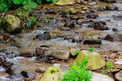 Поток горы в пуще стоковое фото