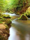 Поток горы в свежем зеленом цвете выходит лес после дождливого дня. Первые цвета осени в вечере греют на солнце лучи. Конец лета н Стоковое Изображение