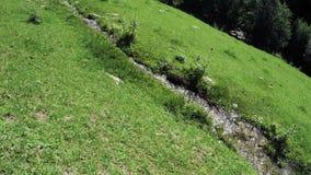 Поток горы в Georgia видеоматериал