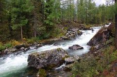 Поток горы в taiga Sayan Стоковая Фотография