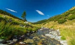 Поток горы в Transylvanian Альпах Стоковое Фото