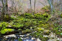 Поток горы, поток между холмами, прогулка вдоль потока горы Стоковые Изображения RF