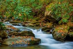 Поток горы обочины вилки реветь Стоковые Фото