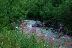 Поток горы спеша вниз с горы стоковые фотографии rf