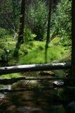 Поток горы спеша вниз с горы стоковое изображение rf