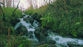 Поток леса бежать над камнями сток-видео