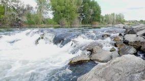 Поток леса, вода потока и зеленые мшистые утесы, мох на потоке леса утесов, река леса, вода бегут быстро акции видеоматериалы