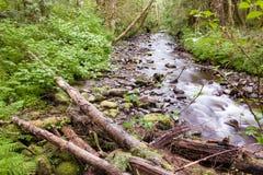Поток леса в лете 1 Стоковая Фотография