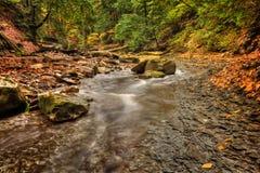 Поток леса в осени Стоковое Фото