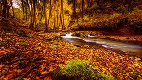 Поток леса в осени Стоковая Фотография