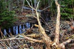 Поток леса и трассировки жизненно важной деятельности 1 Поведение фуражировать животных Стоковое фото RF
