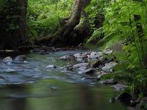 Поток леса долгой выдержки волшебный стоковое изображение rf