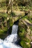 Поток леса Стоковая Фотография RF