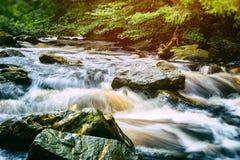 Поток леса стоковое фото rf