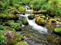 Поток леса Стоковое Фото