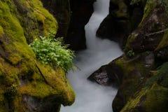 Поток замотки в леднике с мшистыми утесами Стоковая Фотография