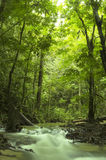 поток зеленого цвета пущи Стоковые Изображения