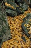 Поток листьев Стоковое Изображение