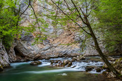 Поток и водопады горы в лесе весной стоковая фотография rf
