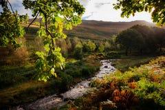 Поток и освещенные контржурным светом листья на dovestone Стоковое фото RF