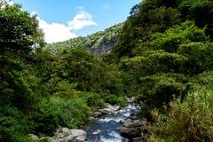 Поток и растительность стоковое изображение