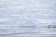 поток ледниковый стоковые изображения rf