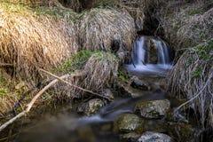 Поток леса стоковые фото