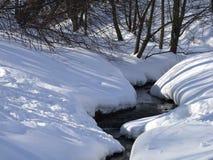 Поток леса среди деревьев в зиме стоковая фотография