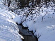 Поток леса среди деревьев в зиме стоковое фото rf