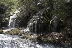 Поток леса с небольшим водопадом стоковая фотография rf