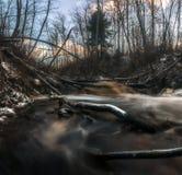 Поток леса темной воды Область Ленинград Россия стоковые фотографии rf