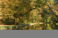 поток листва Стоковые Изображения