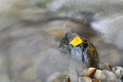 поток листьев стоковые изображения rf
