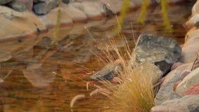 Поток мощенный булыжником с камнями На переднем плане, сухая трава сток-видео