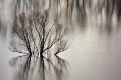 Поток озера Стоковые Изображения
