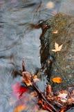 поток осени стоковое фото rf