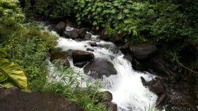 Поток долины Iao Стоковые Изображения RF
